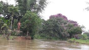 与花的洪水 库存照片