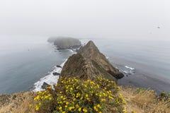 与花的Anacapa海岛有雾的峰顶 库存图片