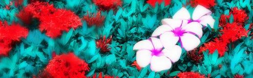 与花羽毛和ixora的全景热带花卉背景 宏指令 Blurred定了调子背景 图库摄影