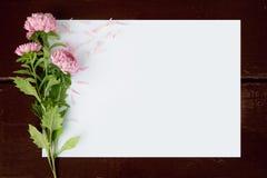 与花翠菊的空插件 库存图片