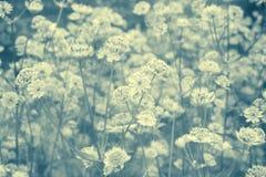与花草甸的梦想的美好的背景  免版税图库摄影