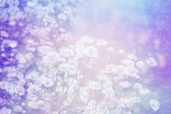 与花草甸的梦想的美好的背景  库存图片