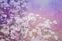 与花草甸的梦想的美好的背景  图库摄影
