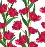 与花郁金香的无缝的纹理 免版税库存照片