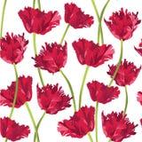 与花郁金香的无缝的纹理 库存图片