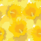 与花黄水仙的无缝的模式 向量例证