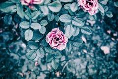 与花,玫瑰的摘要明亮的五颜六色的绿色背景 现代的背景 库存图片