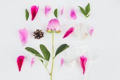与花,瓣的逗人喜爱的葡萄酒摄影叶子舱内甲板放置顶视图 库存图片
