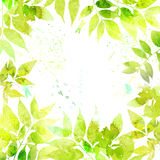 花卉水彩背景 库存图片
