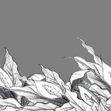 与花Spathiphyllums的装饰边界 皇族释放例证