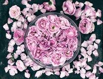 与芽和瓣的构成桃红色在黑暗的粗鲁的背景上升了 库存照片