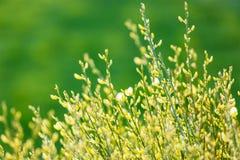 与芽的树枝在春天 图库摄影
