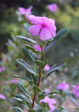 与芽的野花 免版税库存照片