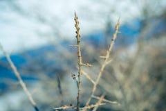 与芽的鼠李分支在河的背景 库存照片