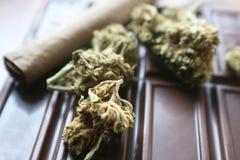 与芽&直言优质的巧克力医疗大麻Edibles 库存图片
