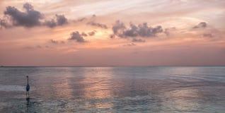 与苍鹭的日落在水中 免版税图库摄影