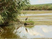 与苍鹭的河风景 库存照片