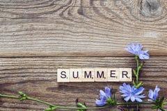 与苦苣生茯和一个题字夏天花的背景  免版税库存图片