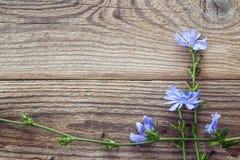 与苦苣生茯花的背景在老木板的 Pla 免版税库存图片