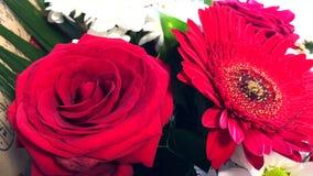 与英国兰开斯特家族族徽、雏菊和大丁草的花束