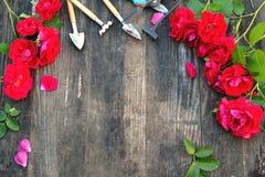 与英国兰开斯特家族族徽和工具的卖花人葡萄酒从事园艺的集合在木桌上 免版税库存图片