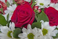 与英国兰开斯特家族族徽的花束 免版税库存照片