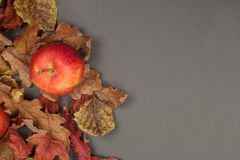 与苹果和秋天叶子的感恩或秋天背景 贺卡用季节性果子 从上面复制空间,看法 库存照片