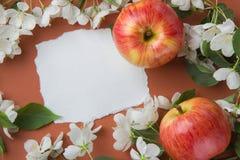 与苹果开花分支的贺卡在橙色backgr的 免版税库存照片