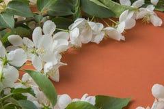 与苹果开花分支的贺卡在橙色backgr的 免版税图库摄影