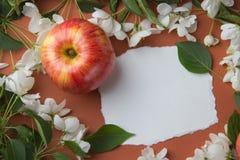 与苹果开花分支的贺卡在橙色backgr的 库存照片