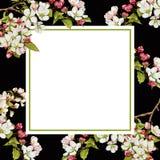 与苹果开花的花卉方形的背景模板 向量例证