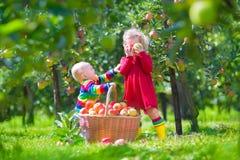 与苹果篮子的孩子 免版税库存图片