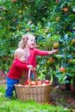 与苹果篮子的孩子 库存图片