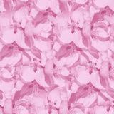 与苹果花的桃红色单色无缝的背景  免版税图库摄影