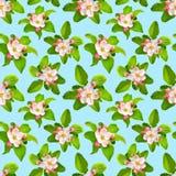 与苹果计算机的春天无缝的背景在蓝色开花 库存图片