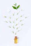 与茉莉花的根本芳香油在白色背景 库存图片