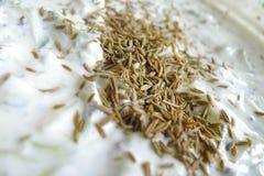 与茴香籽的酸奶 免版税库存照片