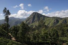 与茶园埃拉,斯里兰卡的绿色montains 免版税图库摄影