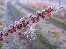 与草分支的艺术性的照片在霜的在路的背景 免版税库存照片