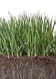 与草和天然肥料的构成 库存照片