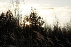 与草和森林的日落 免版税库存图片