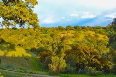 与草和橄榄的自然和五颜六色的领域在一个晴天 免版税库存图片