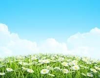 夏天或春天发光的草甸背景。 免版税库存图片