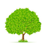 与草和花的绿色结构树 免版税库存照片