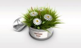 与草和花的锡罐 库存图片