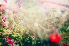 与草和花,室外自然的被弄脏的夏天背景 免版税库存图片