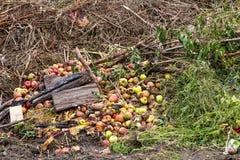 与草和苹果的天然肥料堆 免版税库存图片