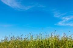 与草和蓝天的抽象自然背景 库存图片