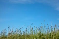 与草和蓝天的抽象自然背景 库存照片