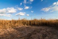 与草和蓝色的春天或夏天抽象自然背景 免版税库存图片